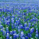 中國雪谷旅游景區-抒情唯美彩鈴錄音